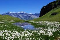 швейцария туры по стране из москвы