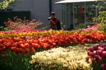 парк цветов кекенхоф из москвы